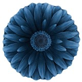 فرش سه بعدی زرباف طرح گل داوودی رنگ آبی