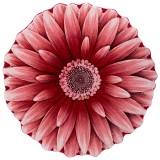 فرش سه بعدی زرباف طرح گل داوودی رنگ قرمز روشن